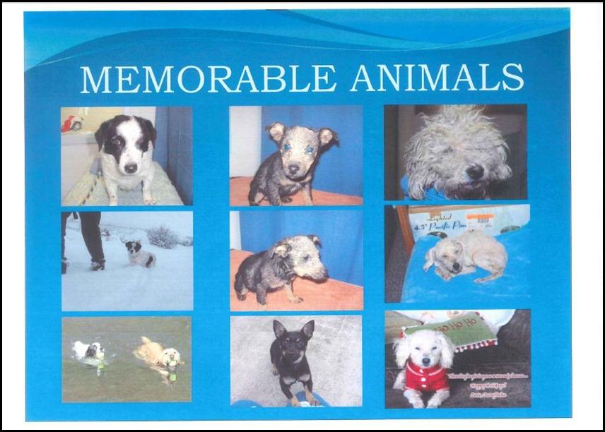 Animal Control 16
